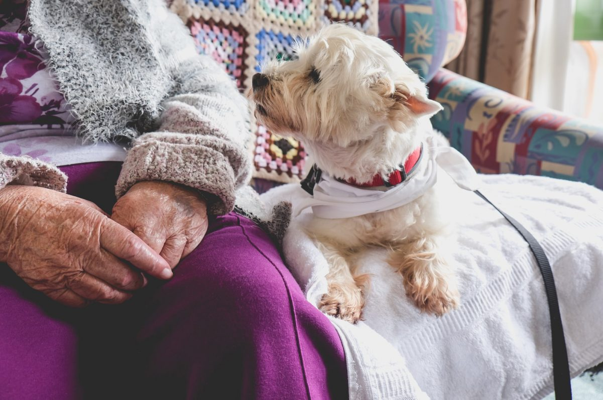 Pets in Nursing Homes: Are They Safe?
